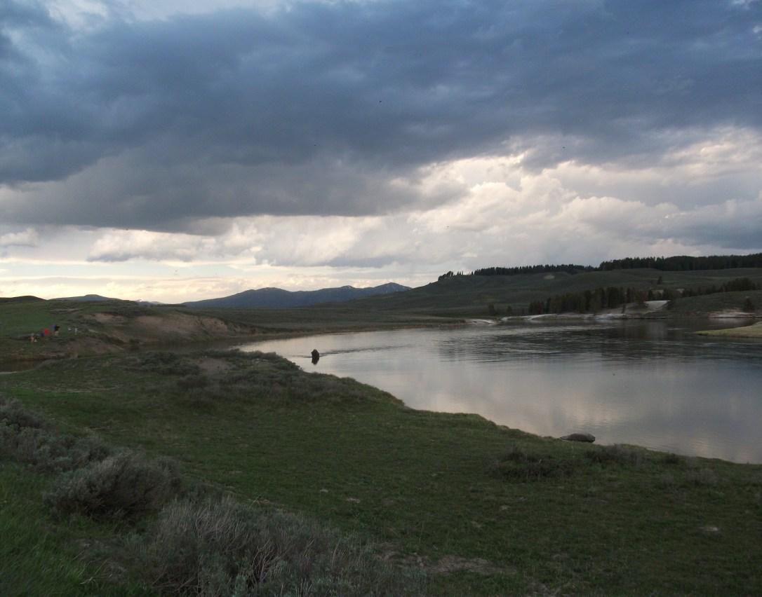 Hayden Valley (2)