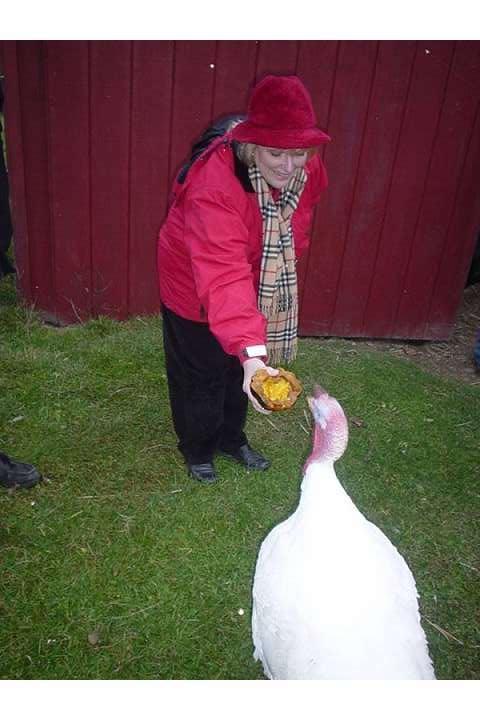 Ling Ling Turkey Lurkey