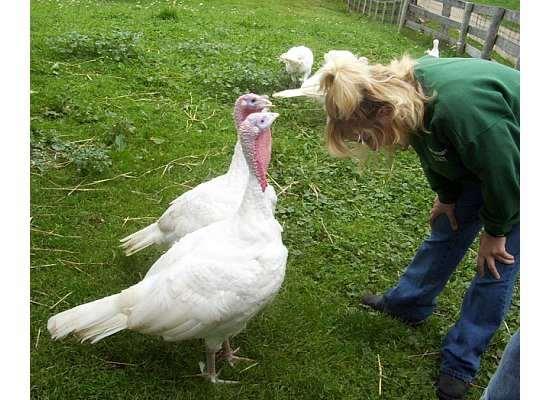 Sweet Pea Turkey Lurkey