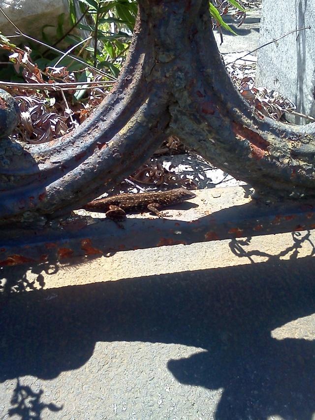 Lafayette Cemetery #1, New Olreans, LA