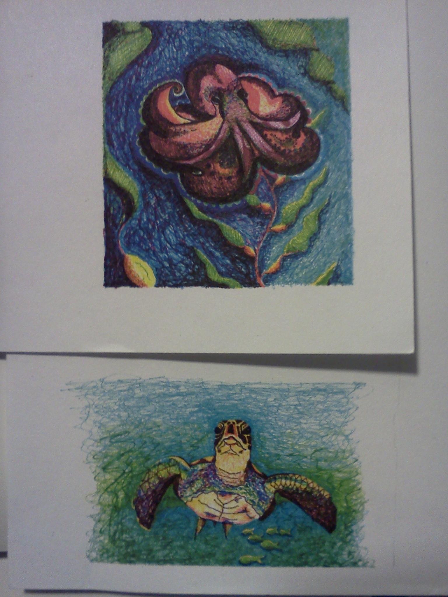 Octopi & sea turtle